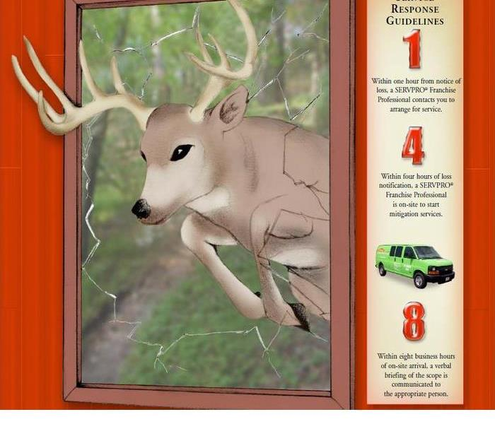 Why SERVPRO Who let the deer in?